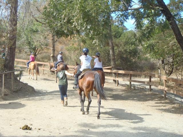 乗馬 趣味